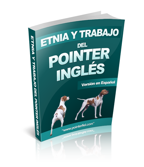 Etnia Y Trabajo del Pointer Ingles